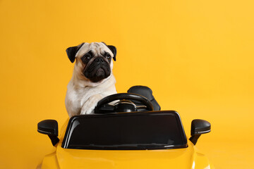 Adorable pug dog in toy car on yellow background