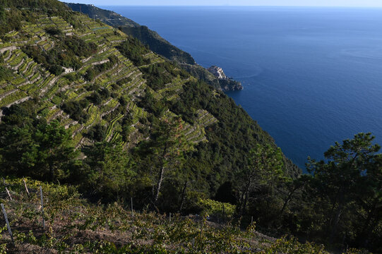 Vista su Corniglia e la collina con terrazzamenti per la coltivazione della vite per produrre il famoso vino delle 5 Terre