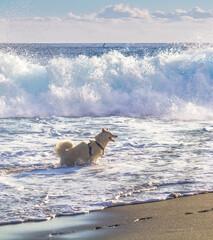 Chien sur plage