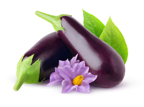 Isolated aubergines. Black raw eggplant fruits with flowers and leaves isolated on white background