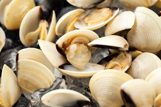 Fresh raw White shell clams. ready to cook.
