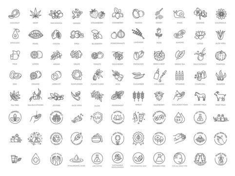 Set line icons of organic cosmetic. Korean cosmetics ingredients. Natural organic cosmetics, vegan food symbols.