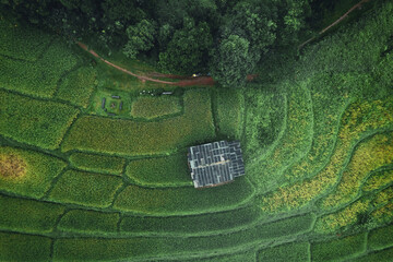 Rice and rice fields on a rainy day