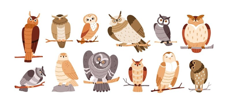 Cute owl birds set. Funny owlets, feathered animals, sitting on tree branches and watching for smth with bulging eyes. Amusing smart birdies. Flat vector illustration isolated on white background