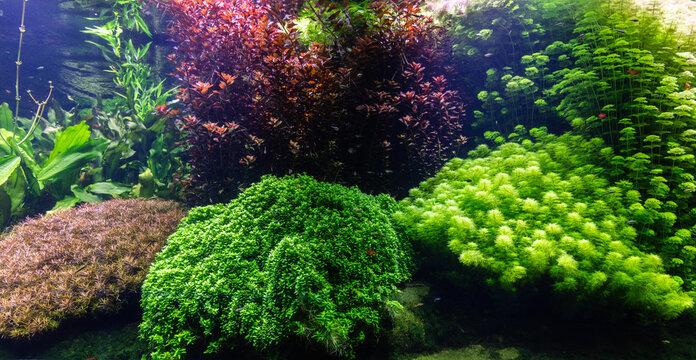 Underwater ocean - fish and coral reef