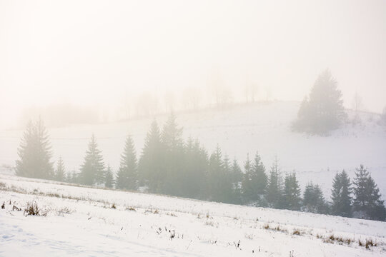 foggy morning weather in wintertime. spruce trees on the snow covered hills. magical nature scenery in cold season