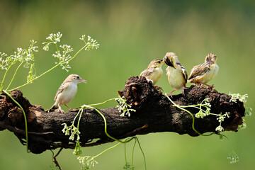 Fototapeta premium bird in nest