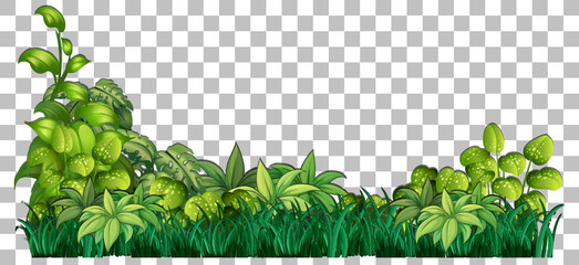 Grass and plants on transparent background for decor