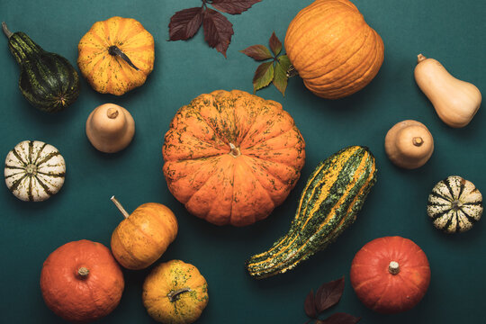 Autumn pumpkins harvest overhead view