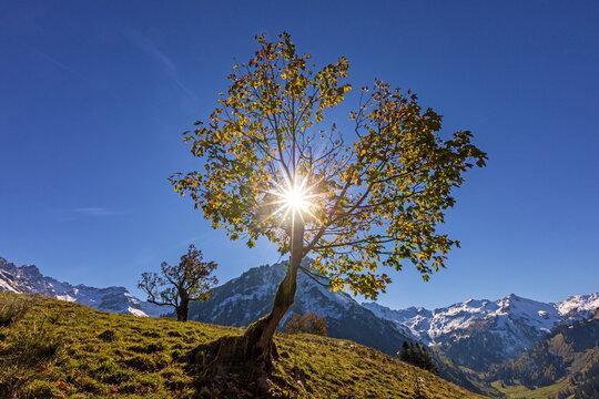 Hinterstein - Allgäu - Herbst - Ahorn - Alpen - Oktober
