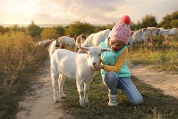 Obraz Farm animal. Cute little girl petting goatling on pasture - fototapety do salonu