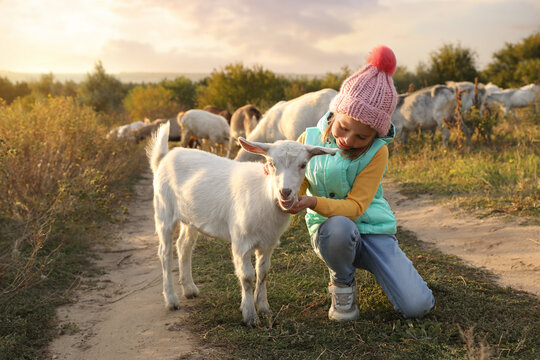 Farm animal. Cute little girl petting goatling on pasture