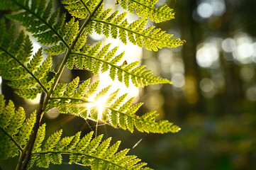 sunlight bright shining leaf forest dark scenery, ready for text and print, panoramic close up...
