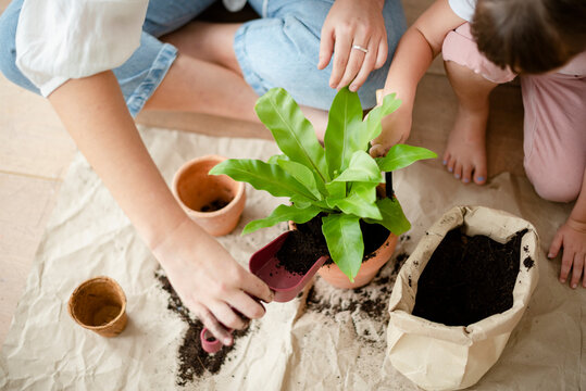 Kid DIY plant potting at home with mom