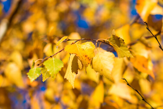 Autumn, abstract blurred background, a branch of a tree with a yellow leaf with bokeh elements.