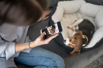 Obraz A girl making photos of a puppy on her smartphone - fototapety do salonu