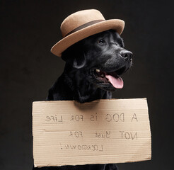 Stylish black doggy with a hat and sign on its front in dark background