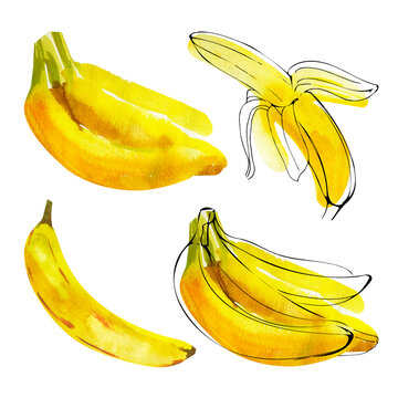 Set of watercolor banana illustrations with ink outline silhouette isolated on white background