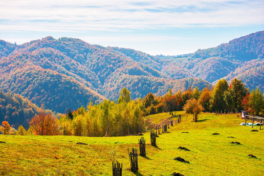 rural landscape in mountains. grassy fields on the hill. forest in colorful foliage. wonderful nature scenery of romania on a warm sunny autumn day