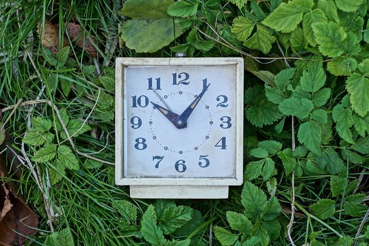 one old white square alarm clock lies in green grass and vegetation on the street in nature