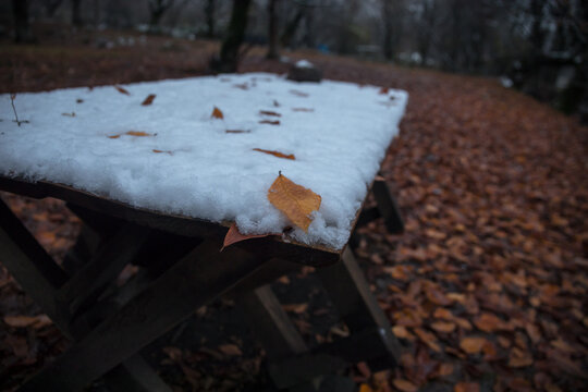 Old wooden table top with leaves falling in forest, autumn background