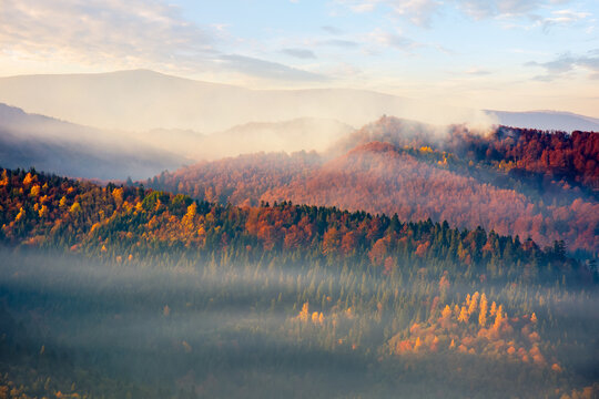 mountain nature background. scenic foggy weather. trees in colorful foliage on the hills